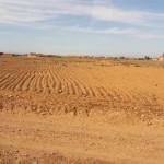 Põllumajandus Marokos